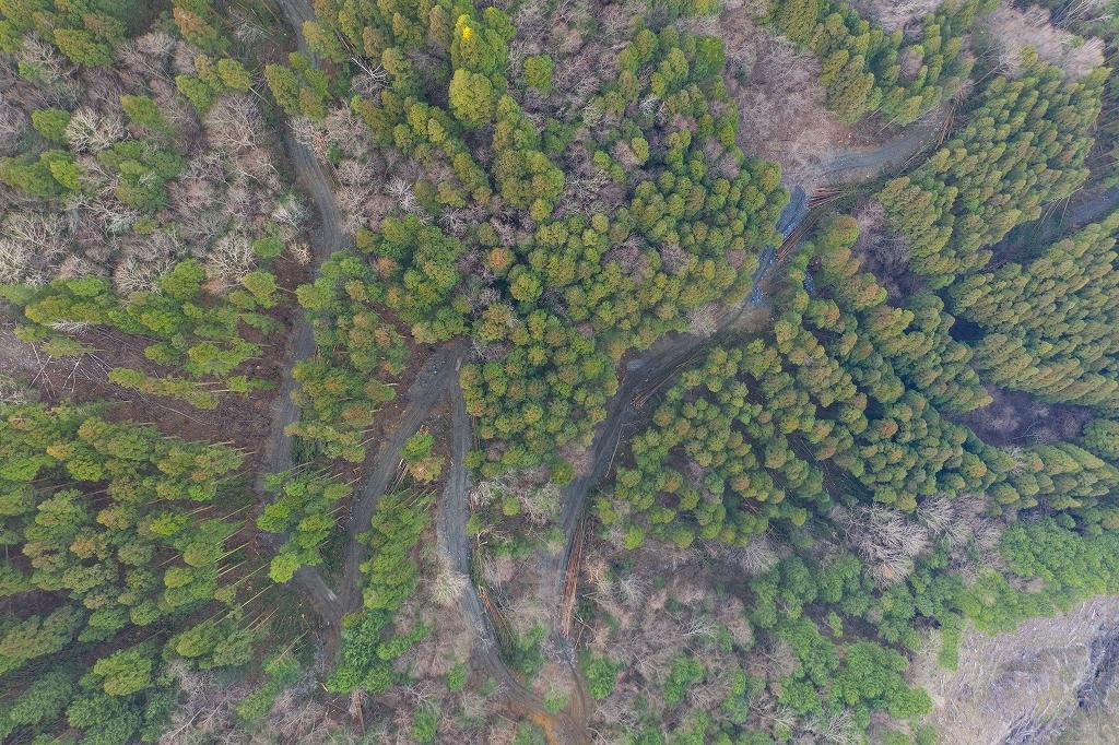 林業 高知 環境保護 植樹