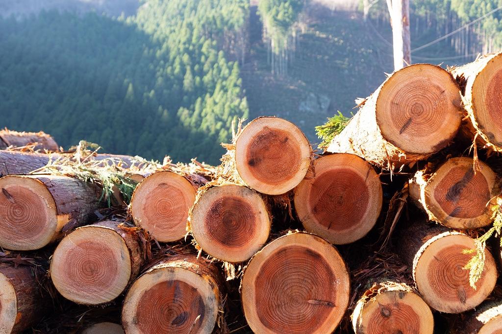 高知県 林業 森林 緑の雇用