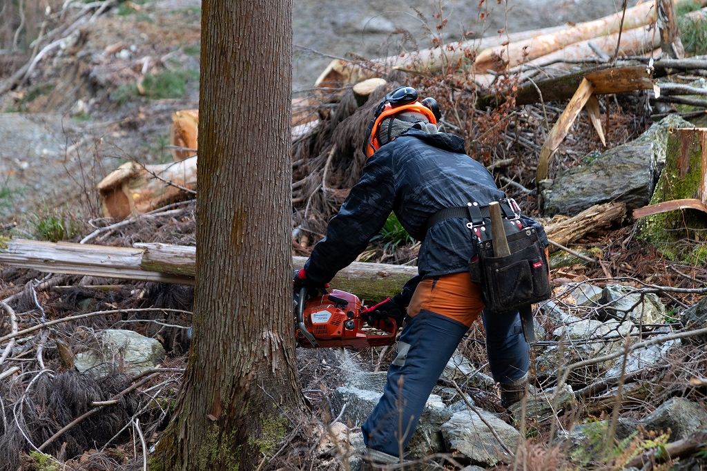 高知 林業 伐採 求人